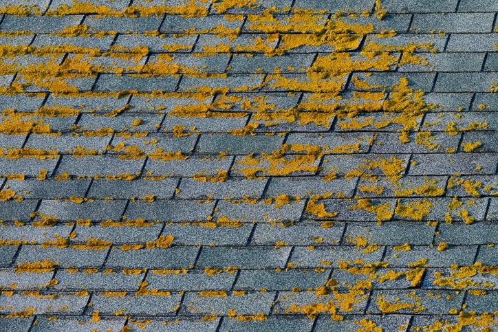 les mousses et les algues de sa toiture